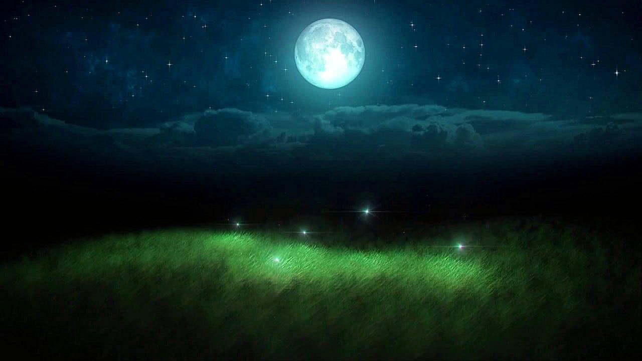 Glowing Fireflies Summer Night HD Video Screensaver