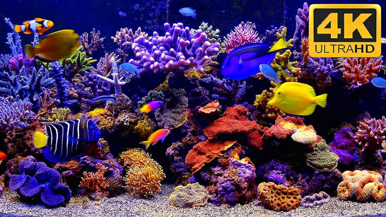 THE BEST Aquarium Video 4K TV Screensaver