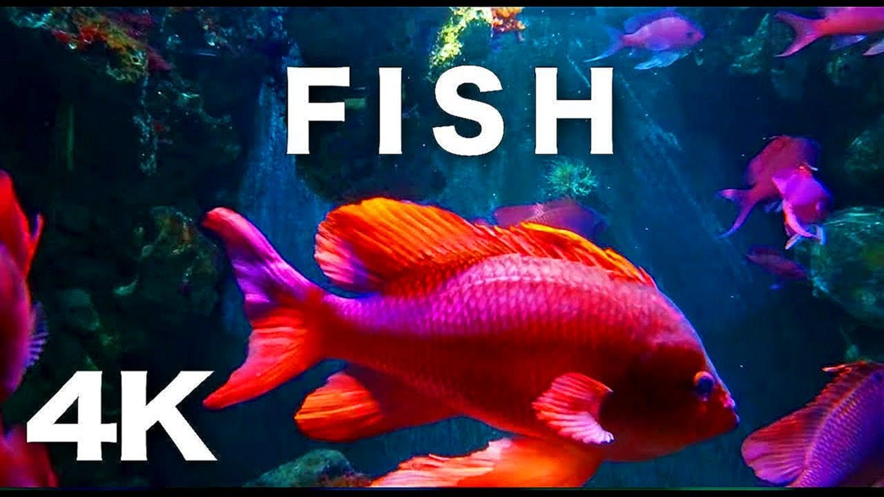 FISH TANK AQUARIUM 4K CORAL REEF SCREENSAVER