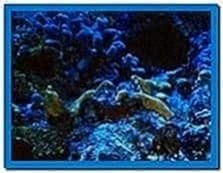 3D Aqua Screensaver 2.86