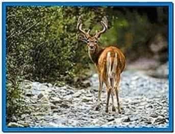 3D Deer Screensaver