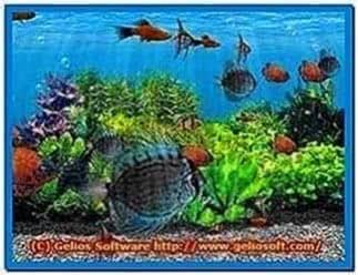 3D Fish School Screensaver 3.94