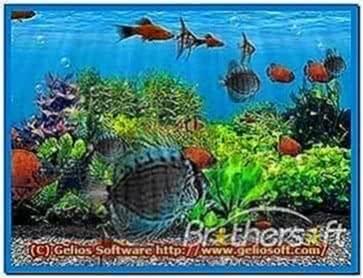 3D Fish School Screensaver Windows 7