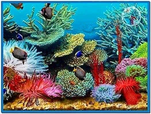 3D Tropical Fish Aquarium Iii Screensaver