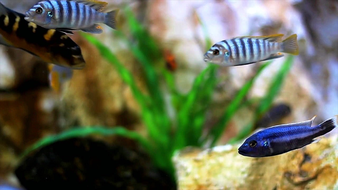 Real Aquarium 4K Relaxing Screensaver