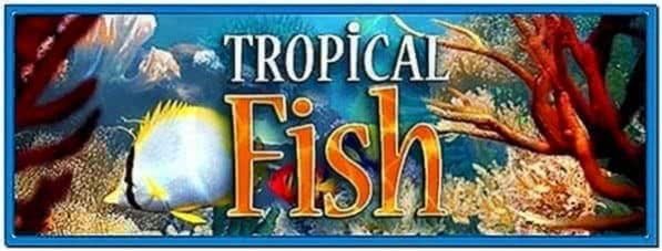 3planesoft Tropical Fish 3D Screensaver 1.0
