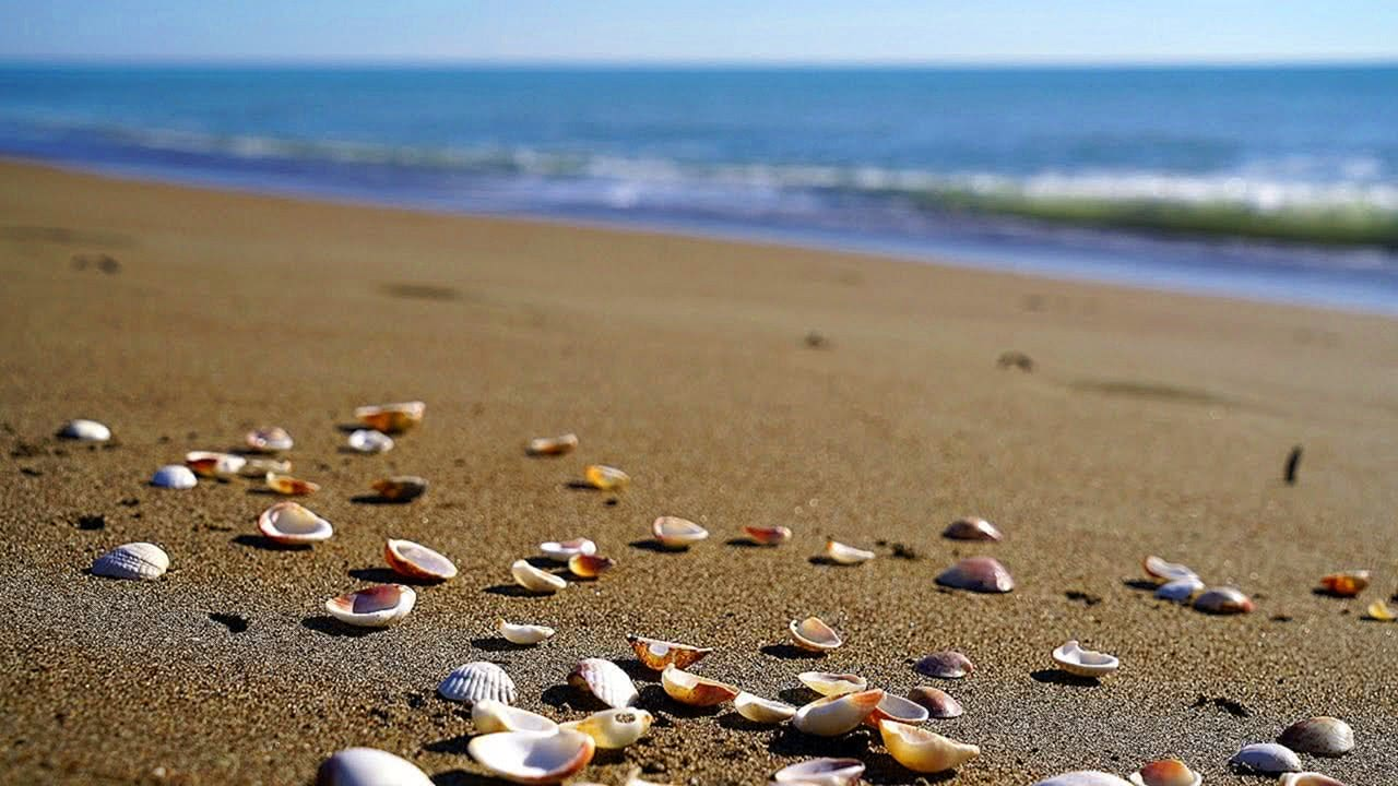 Seashells and beach waves moving 4K Relaxing Screensaver
