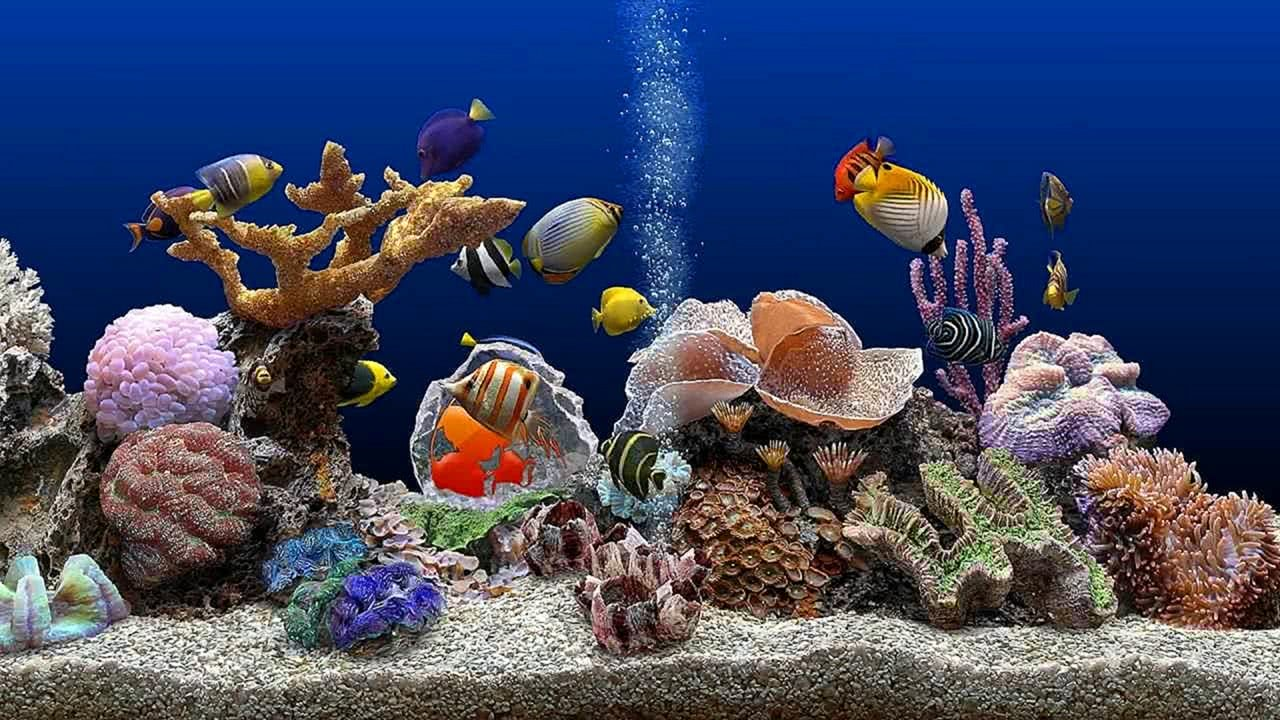 Marine Aquarium UHD Screensaver Blue Ocean