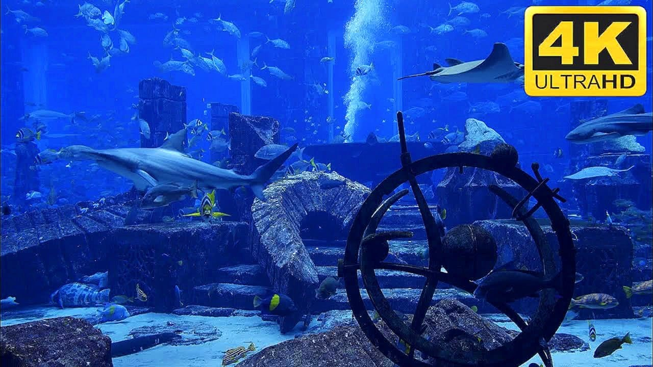 4K Shark Tank Aquarium Screensaver