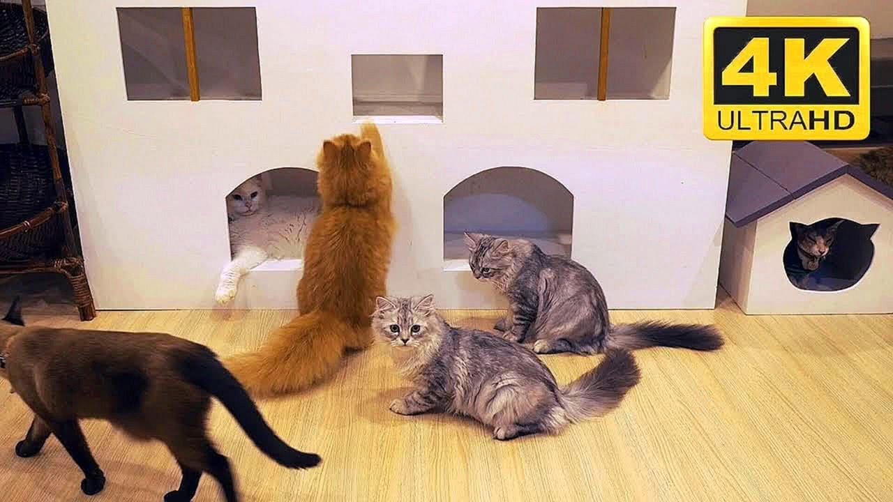 4K Cat Cafe Video Screensaver