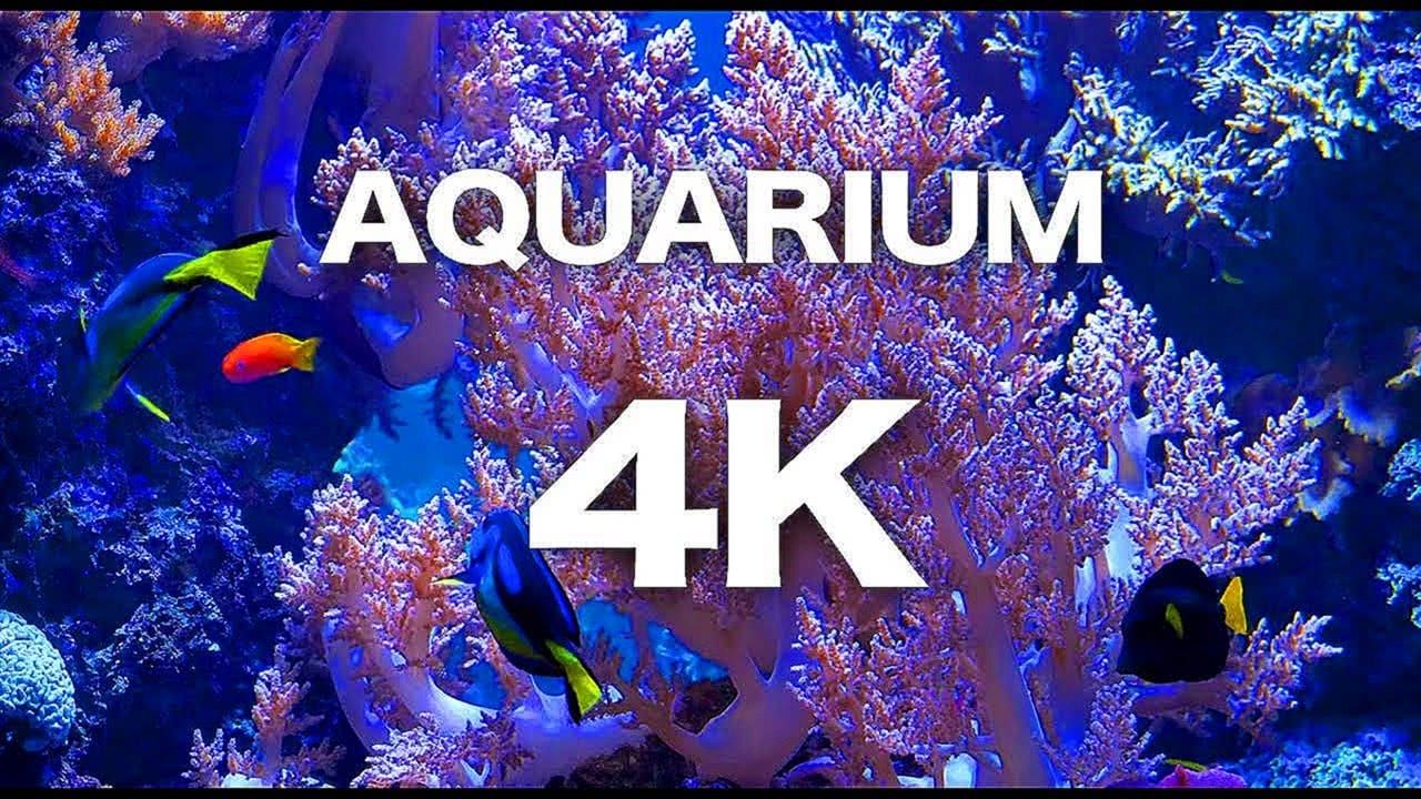 SCREENSAVER 4K FISH TANK AQUARIUM RELAXING