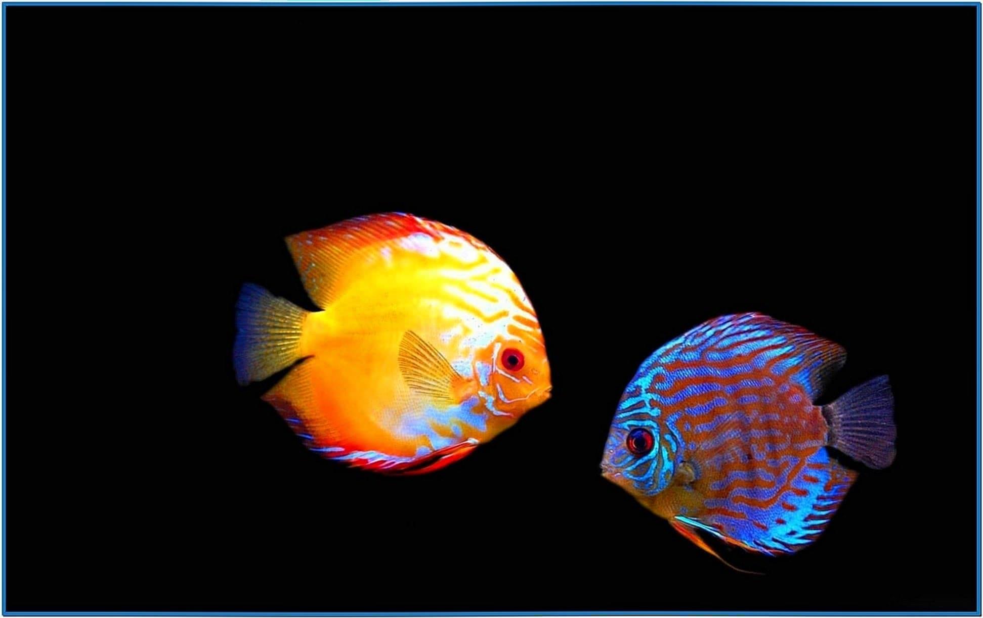 Amazing Aquarium HD Screensaver