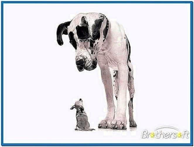 Animals in 3D screensaver 1.0