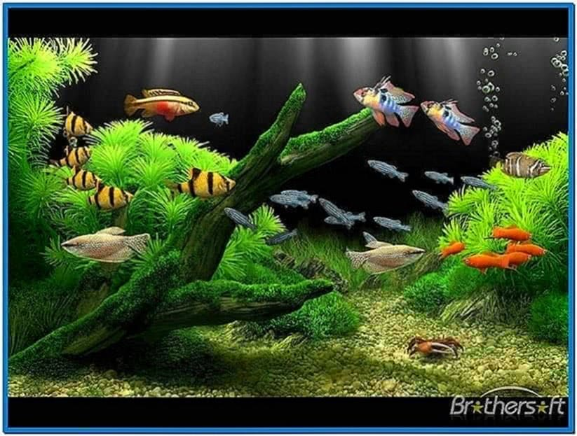 Animated Fish Tank Screensaver Mac