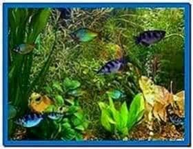 Aqua 3D screensaver 1.51