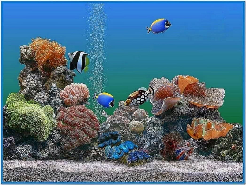 Aquarium desktop animated screensaver download free for Desktop fish tank