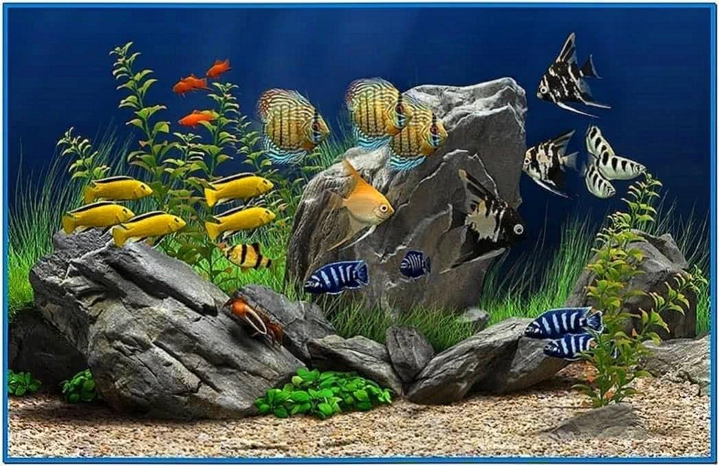 Aquarium Screensaver Feed Fish