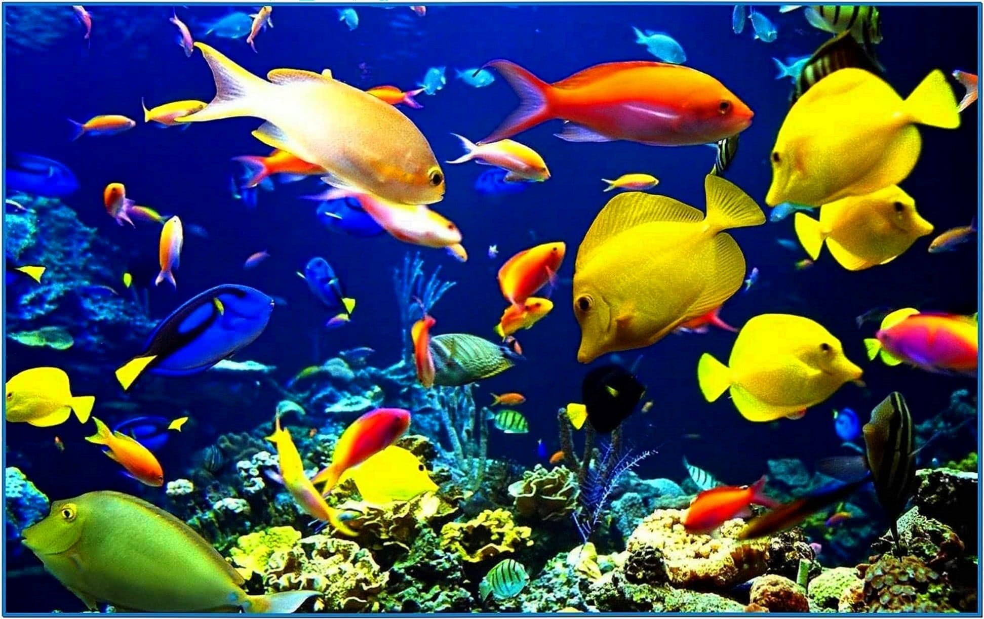 Aquarium screensaver mac hd download free for Aquarium fish online