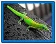 Audi Gecko Screensaver Mac