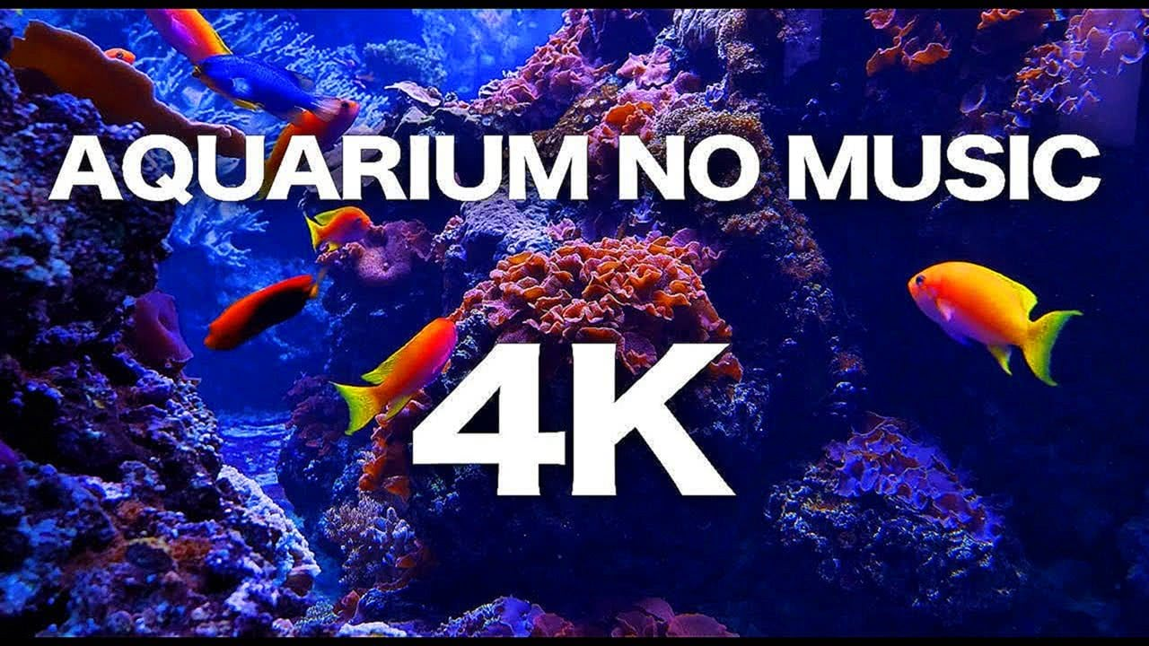 4K CORAL REEF AQUARIUM RELAXING SLEEP SCREENSAVER