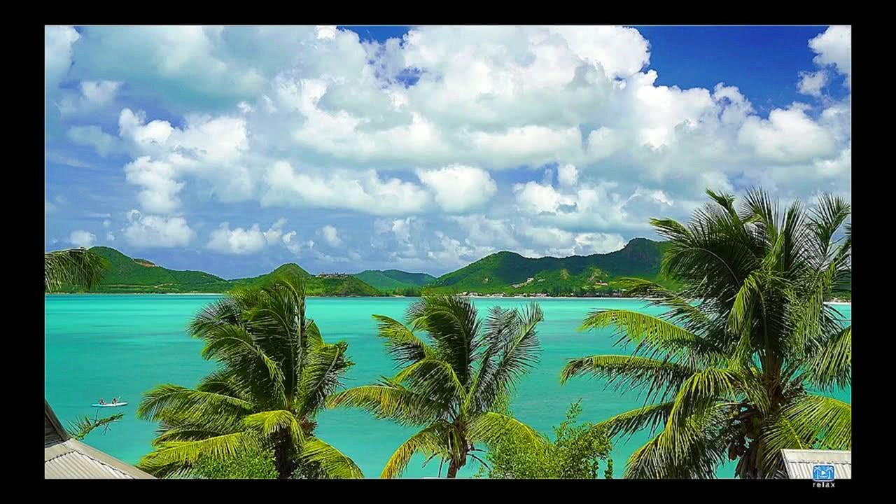 4K UHD Nature Screensaver: Caribbean Palm Vista Static Nature