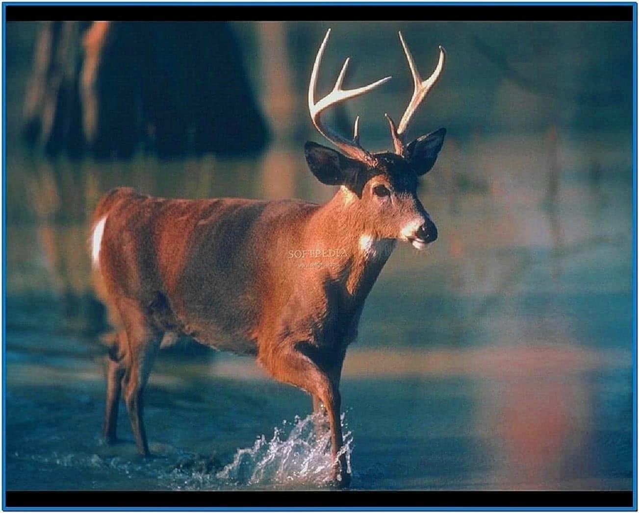 Deer screensavers - Free deer hunting screensavers ...