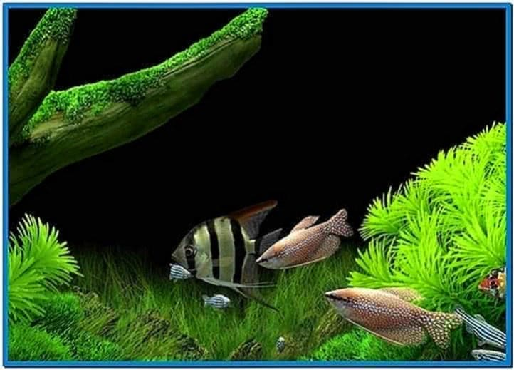 Dream Aquarium Screensaver Windows XP