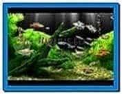 Dream Aquarium XP Screensaver 1.0
