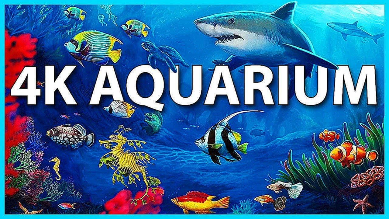 4K Aquarium for Relaxation Sleep Meditation Screensaver