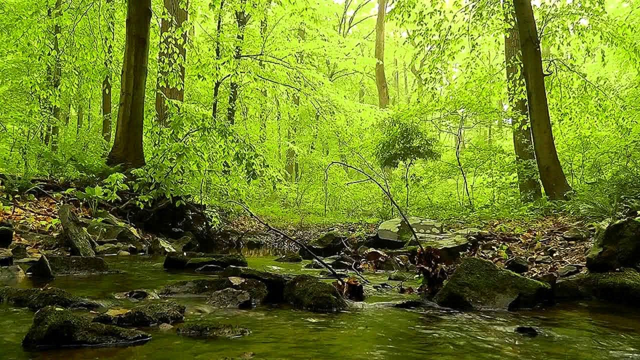 Video 60 minutes of Woodland Ambiance