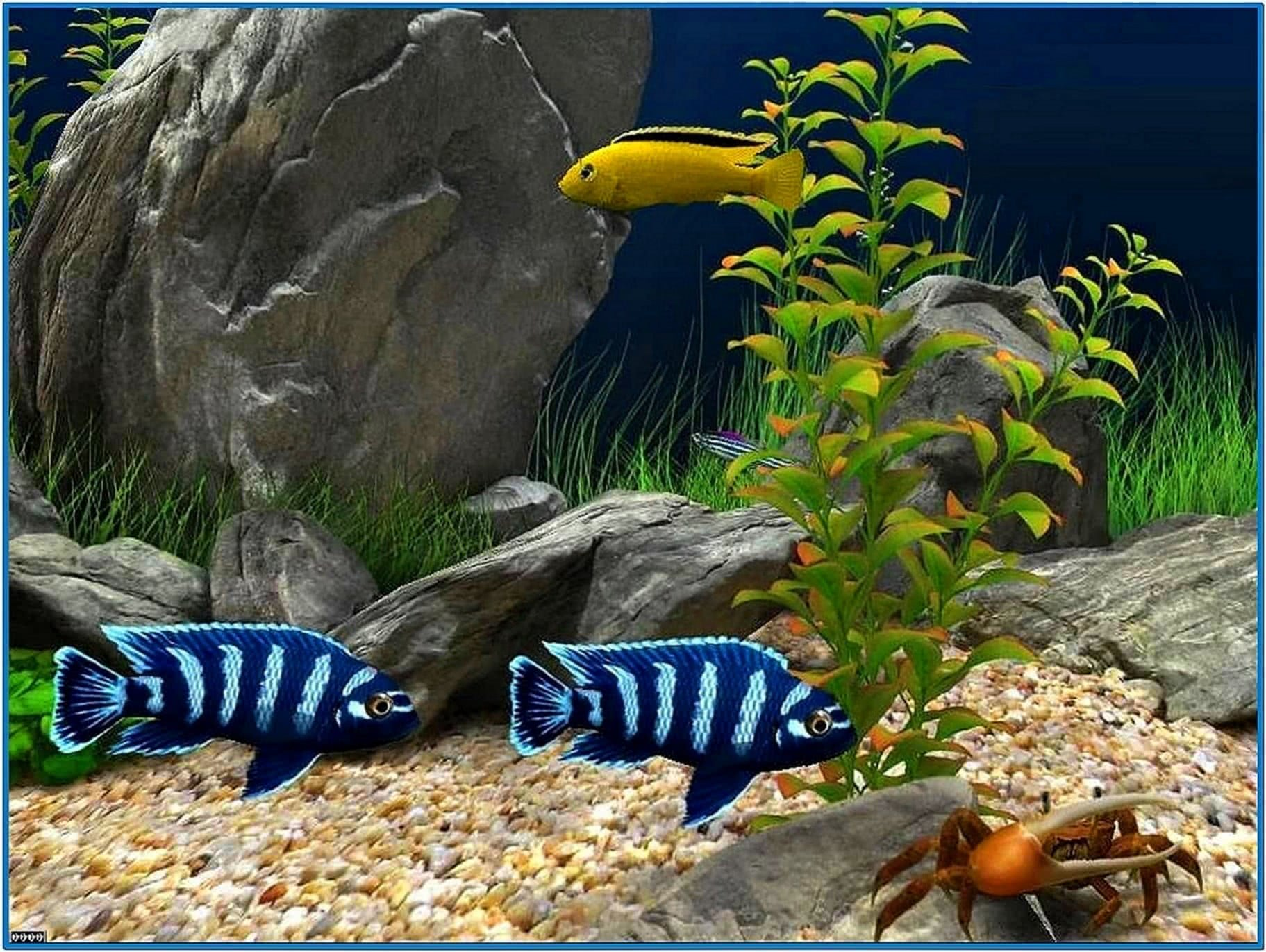 Fish Aquarium Screensaver HD