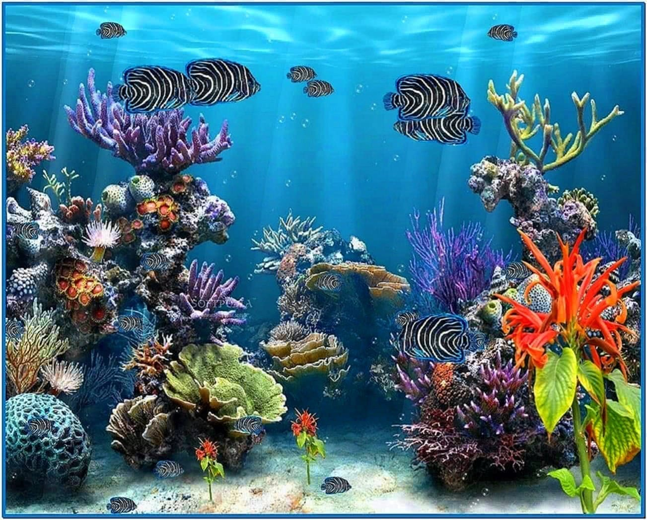Fish tank screensaver full version download free for Fish tank screen