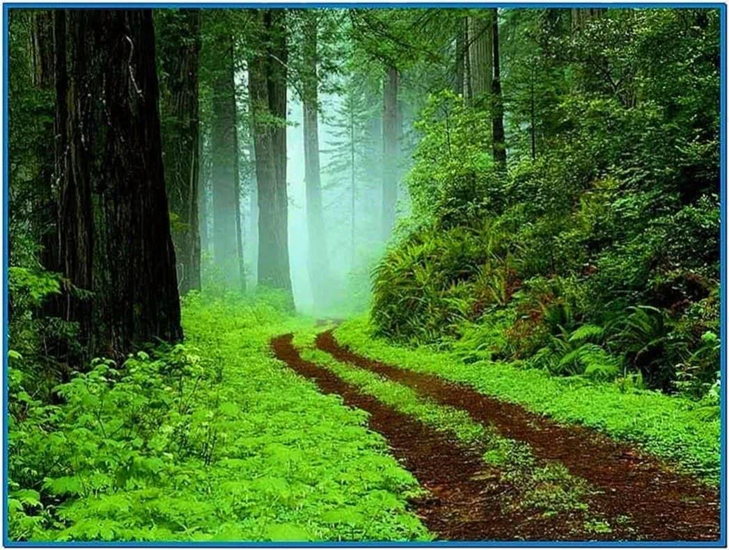 Forest World 3D Screensaver
