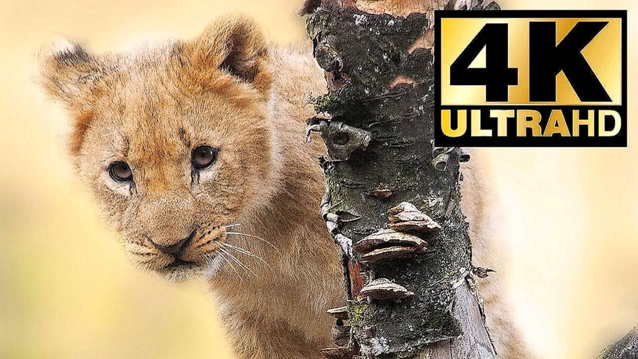 4K SCREENSAVER BABY ANIMALS