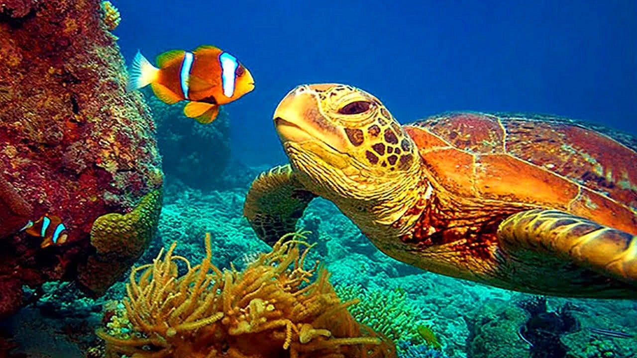 Stunning 4K Underwater footage - Colorful Sea Life Video
