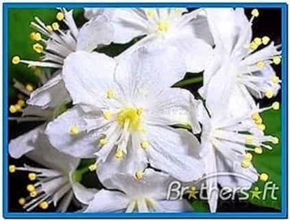 Garden flowers 3D screensaver 1.0