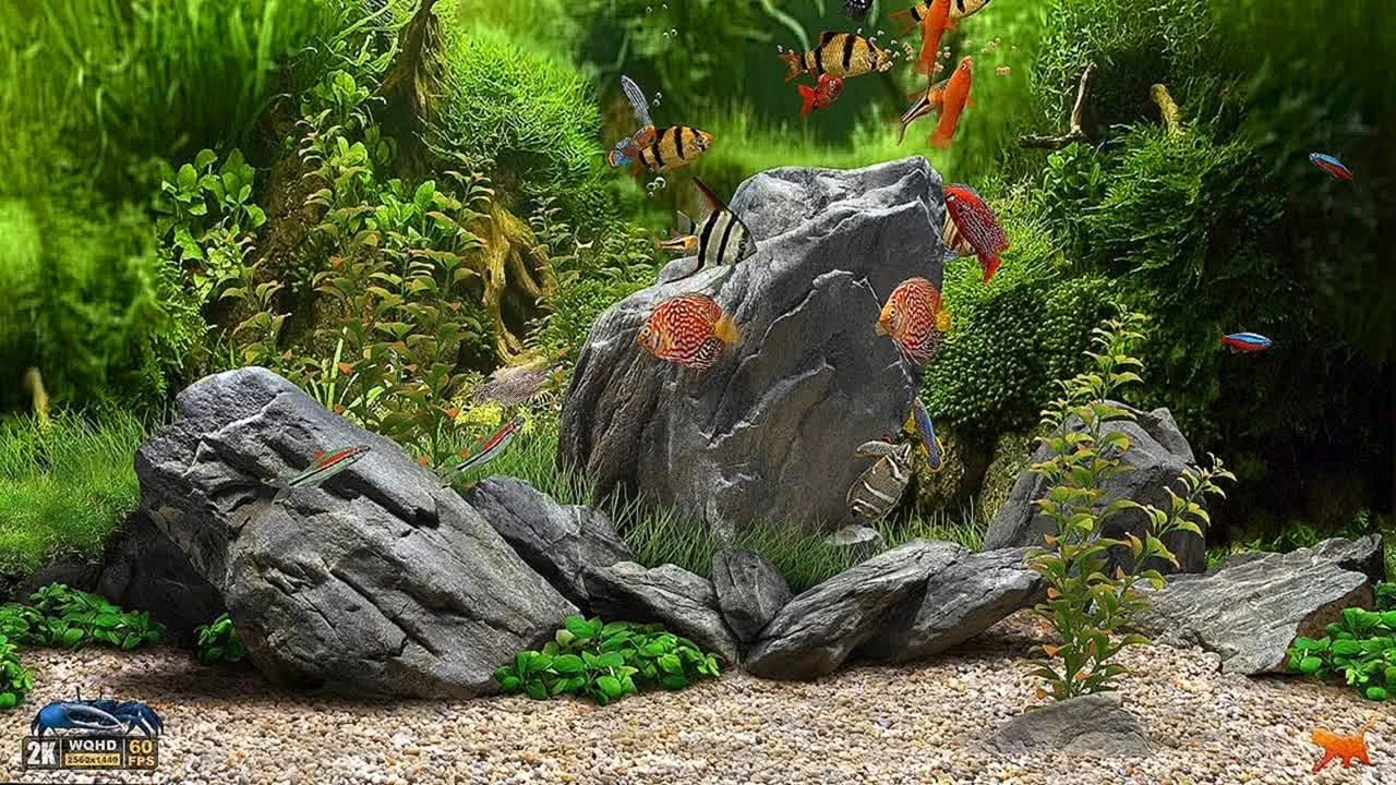 Dream Aquarium UHD Screensaver 10 FishTanks