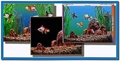 Goldfish aquarium screensaver Mac
