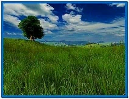 Grassland 3D Screensaver and Animated Wallpaper