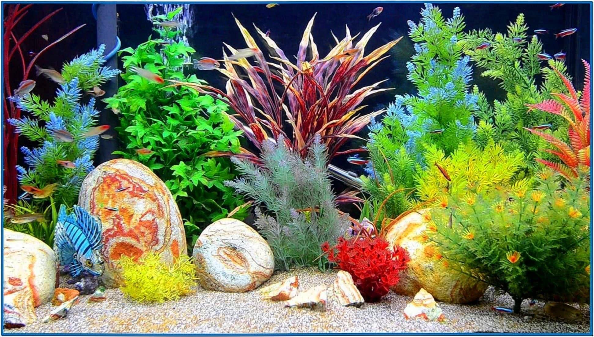 HD Aquarium Screensaver for TV