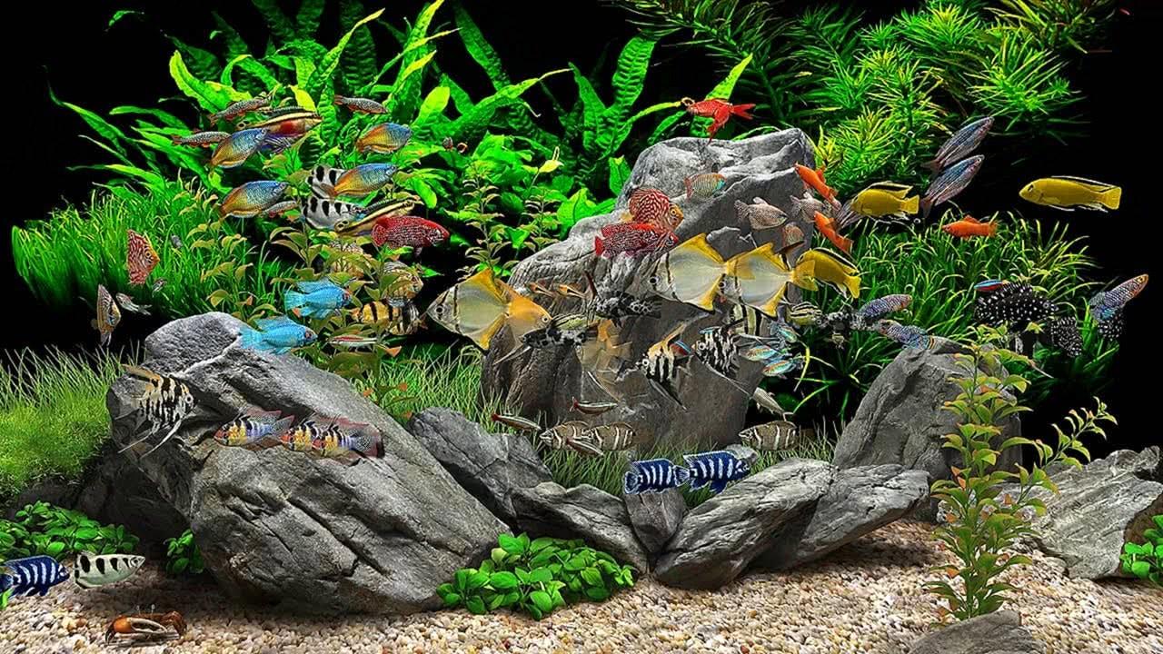 Dream Aquarium 8 Tanks 4K