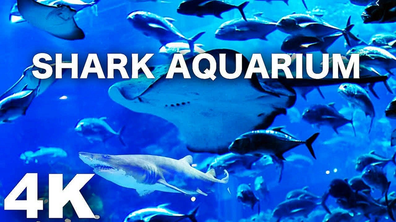 SHARK AQUARIUM 4K Sleep Relax Screensaver