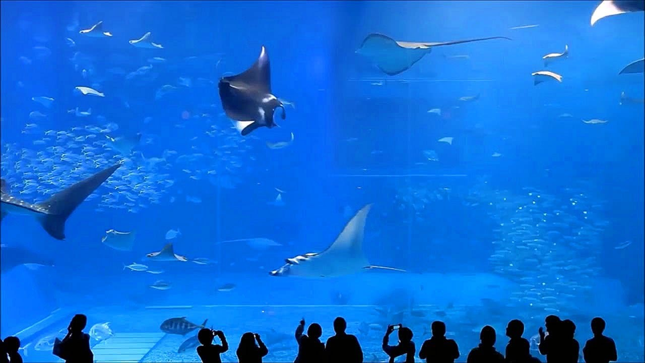 Video 10 Hours of Okinawa Churaumi Aquarium