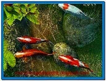 Koi Fish 3D Screensaver Code
