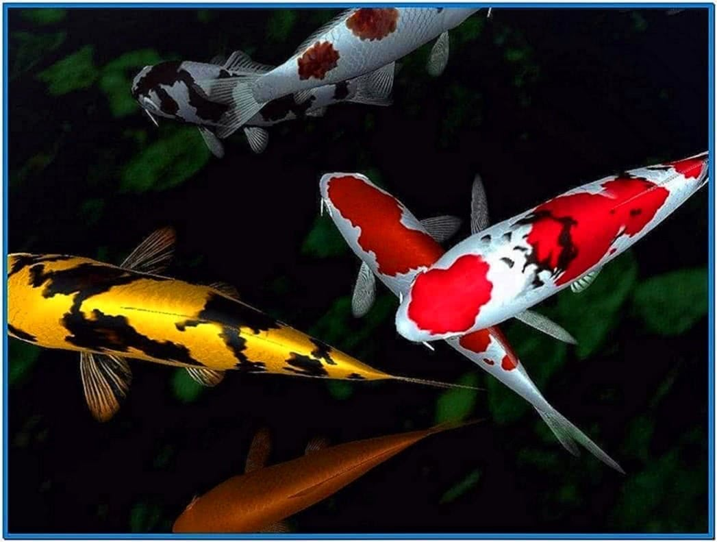Koi fish pond screensaver download free for Koi pond screensaver