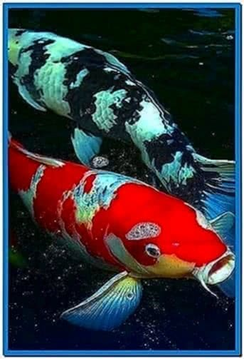 Koi fish screensaver for iphone download free - 3d koi pond live wallpaper iphone ...