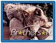 Lakota Wolves Screensaver