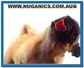 Licking Dog Screen Cleaner Screensaver 2.0