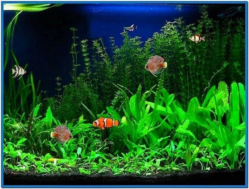 Live Aquarium Screensaver for PC