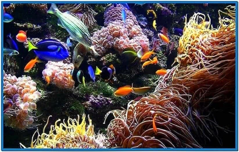 Live Aquarium Screensaver Mac